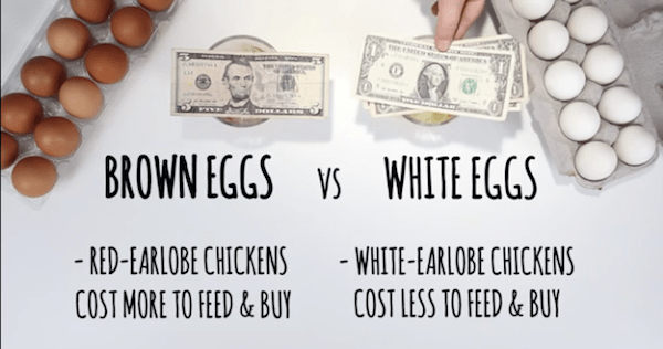 brown-egg-vs-white-egg